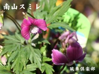 gardening_1067.jpg