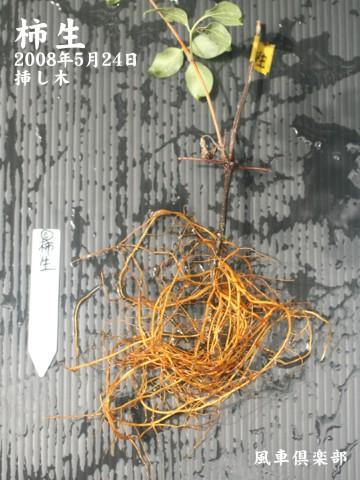 gardening_1417.jpg