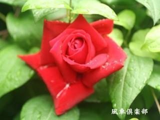 gardening_1893.jpg