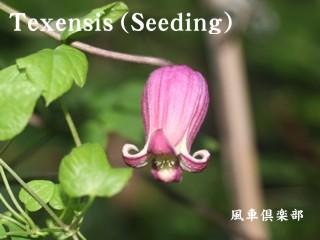 gardening_1911.jpg