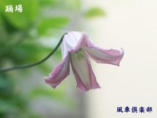 gardening_2372.jpg
