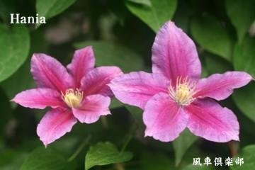 gardening_2375.jpg