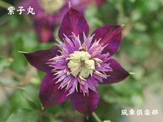 gardening_2377.jpg