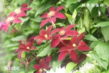 gardening_2378.jpg