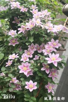 gardening_2379.jpg