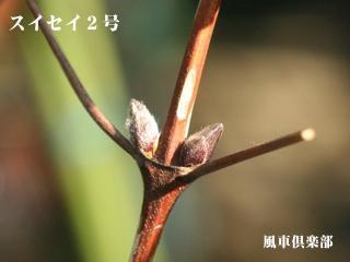 gardening_2547.jpg