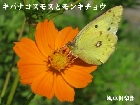 gardening_2849.jpg