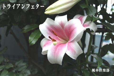 gardening_3100.jpg