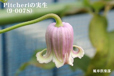 gardening_3139.jpg