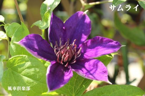 gardening_3148.jpg