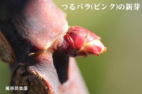 gardening_3187.jpg