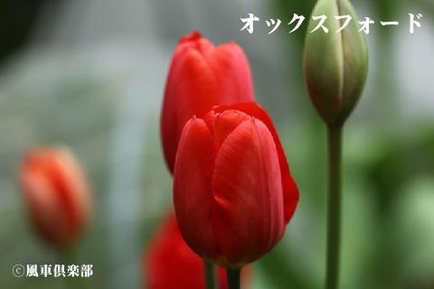 gardening_3245.jpg