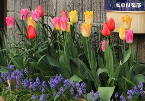 gardening_3246.jpg
