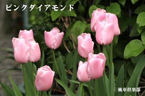 gardening_3247.jpg