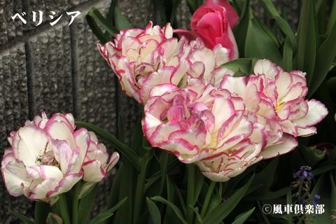 gardening_3248.jpg