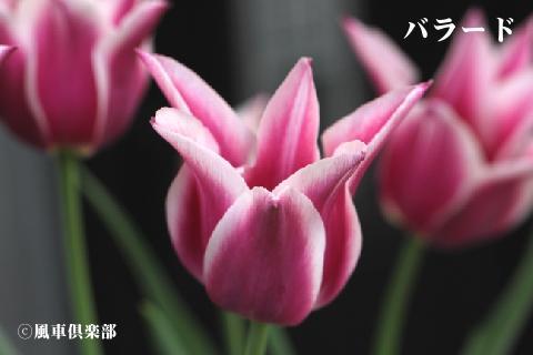 gardening_3249.jpg