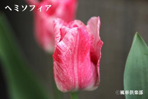 gardening_3250.jpg