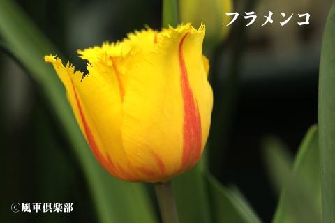 gardening_3251.jpg