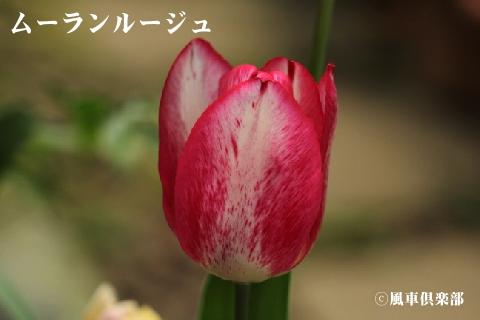 gardening_3252.jpg