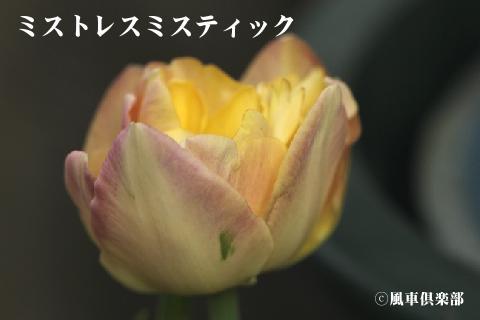 gardening_3253.jpg