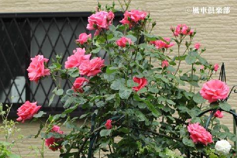 gardening_3346.jpg