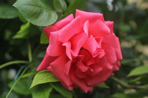 gardening_3347.jpg
