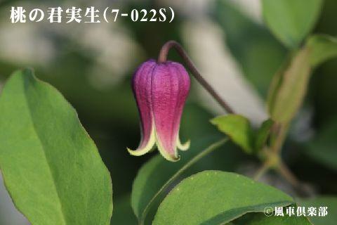 gardening_3361.jpg