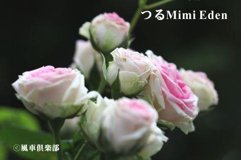 gardening_3372.jpg