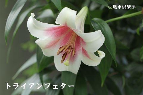 gardening_3393.jpg