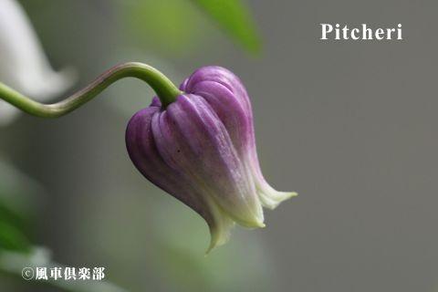 gardening_3397.jpg