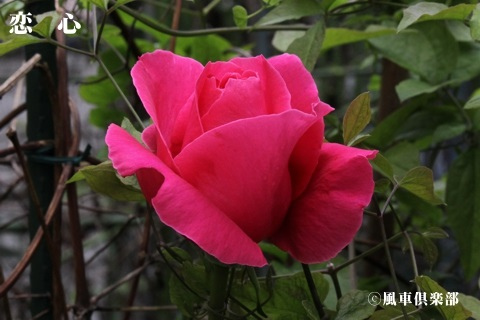 gardening_3440.jpg