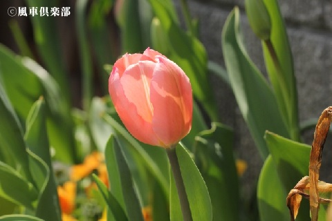 gardening_3491.jpg