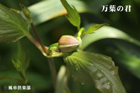 gardening_3496.jpg