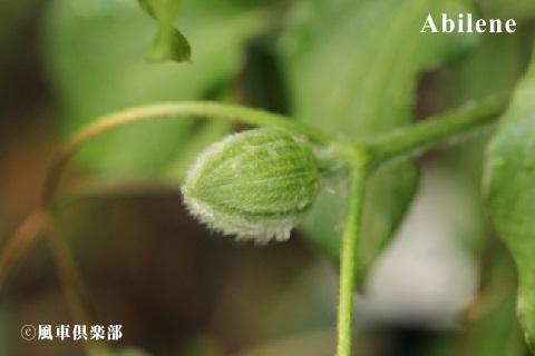 gardening_3502.JPG
