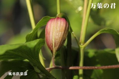 gardening_3503.JPG