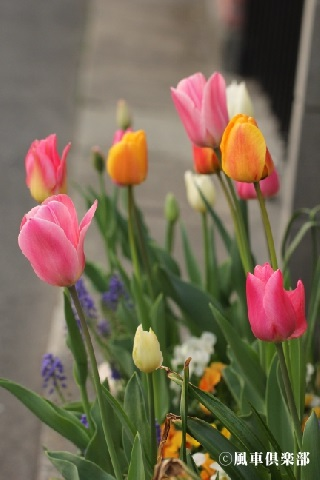 gardening_3509.jpg
