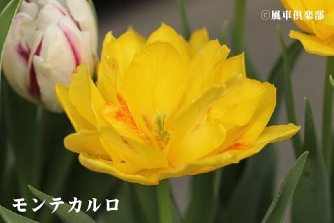 gardening_3513.jpg
