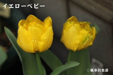 gardening_3514.jpg