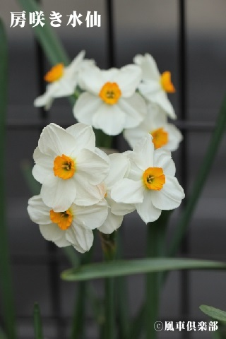 gardening_3517.jpg