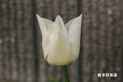 gardening_3523.jpg