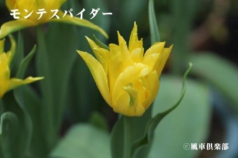 gardening_3524.jpg