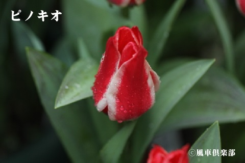 gardening_3525.jpg