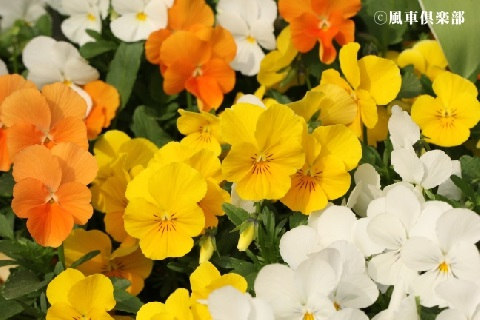 gardening_3527.jpg