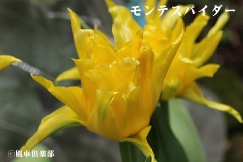 gardening_3528.jpg