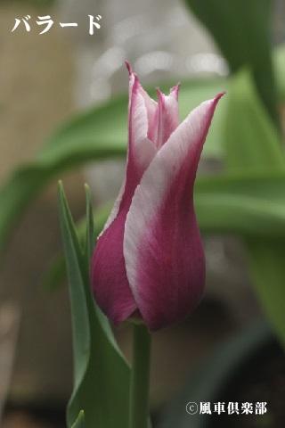 gardening_3529.jpg