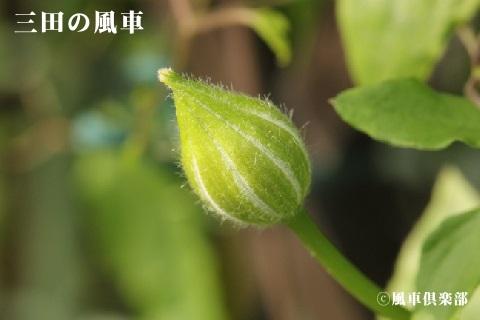 gardening_3534.jpg