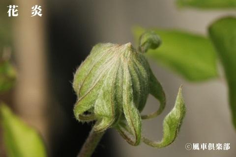 gardening_3537.jpg