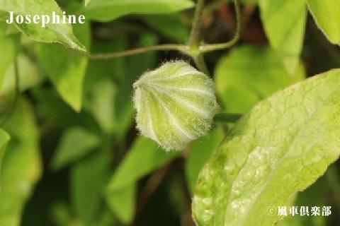 gardening_3540.jpg