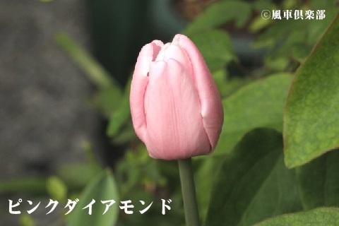gardening_3545.jpg