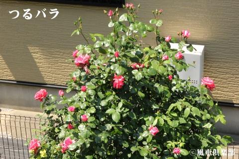 gardening_3617.jpg